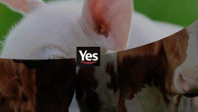 Foto de Charles Boisson é o novo Business Development da Yes
