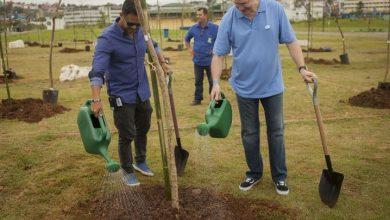 Foto de OdontoPrev realizou plantio de árvores em parque de Carapicuíba