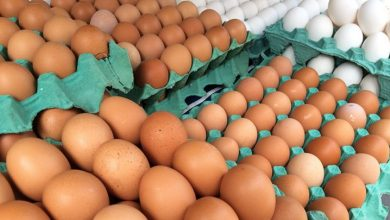 Foto de Produção de ovos é recorde com alta em todos os setores da pecuária no 2º tri