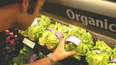 Foto de Consumo de Alimentos Orgânicos aumenta no Brasil